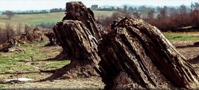Foresta - Fossile - Dunaroba - Umbria