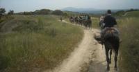 Passeggiate a cavallo - Escursioni equestri ad Amelia Terni Umbria